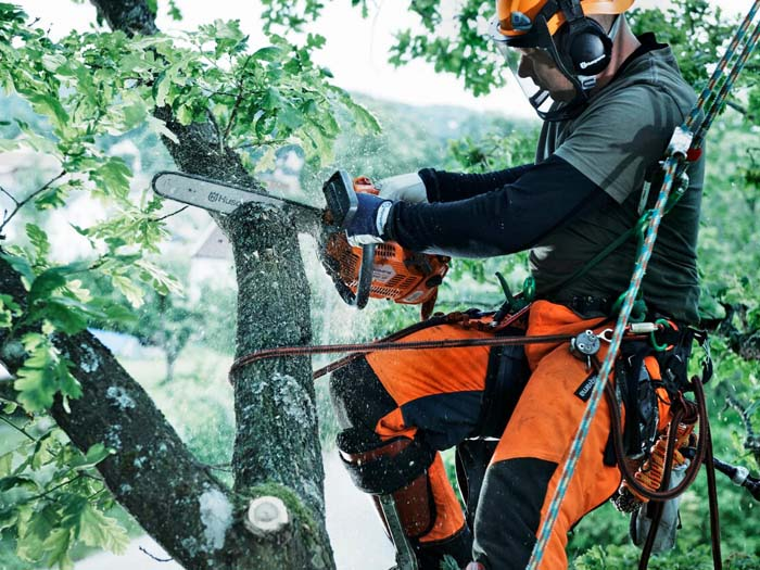 Кронирование деревьев в Усолье-Сибирском