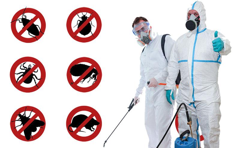 Уничтожение тараканов, клопов, клещей, блох, муравьев, моли в Усолье-Сибирском