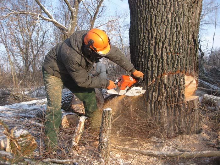 Спиливание деревьев в Усолье-Сибирском